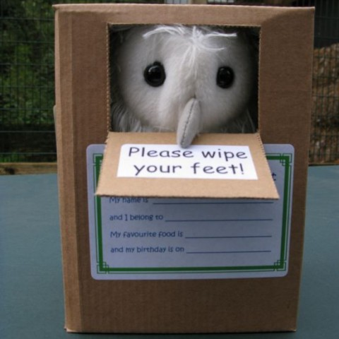 Barn Owl Trust Owlet In Box