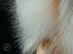 Barn Owl Anatomy Close Up Beak Feathers