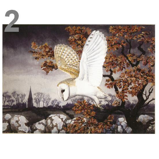 Barn Owl At Dusk A5 Card