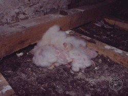 Barn Owl Nest Eggs House Loft