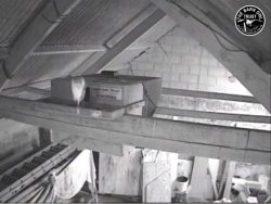 Barn Owl Webcam Barncam Screenshot 29th May 2018