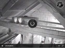 Barn Owl Webcam Nestcam Screenshot 5th September 2018