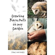 Barn Owls In My Garden by Paul Hackney