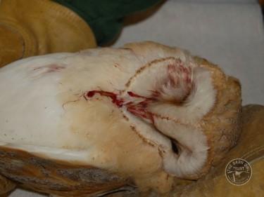 BAROW RTA Blood Beak 2 [Chris Richards] 121006 (B)
