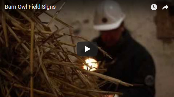 Barn Owl Signs Video