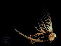 Dead Owl Wallpaper photo