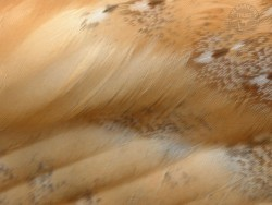 Barn Owl Feather Wallpapers