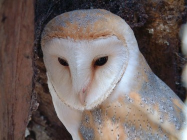 Wallpaper Archives The Barn Owl Trust