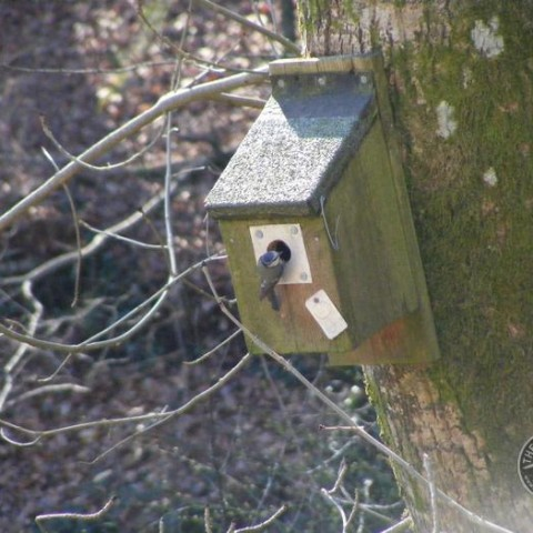 Blue Tit Nestbox [Sarah Nelms] 030311