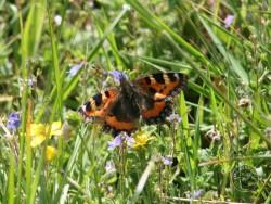 Butterflies Of Rough Grassland 01