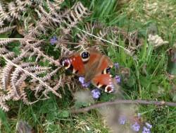 Butterflies Of Rough Grassland 06