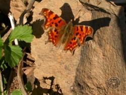 Butterflies Of Rough Grassland 08