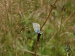 Butterflies Of Rough Grassland 12