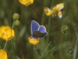 Butterflies Of Rough Grassland 15