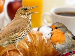 Dawn Chorus Breakfast And Birds