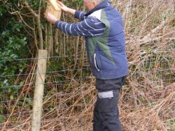 Dormouse Boxes Erected In The LLP Wildlife Diary February 2018