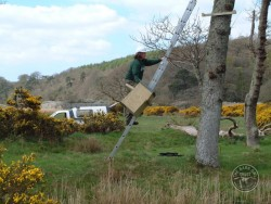 Erecting A Barn Owl Treebox 05