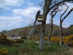 Erecting A Barn Owl Treebox 06