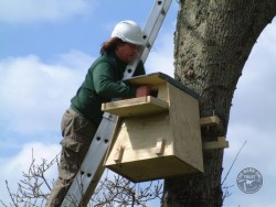 Erecting A Barn Owl Treebox 07