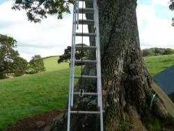 Erecting A Barn Owl Treebox 10
