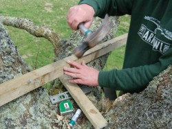 Erecting A Barn Owl Treebox 15