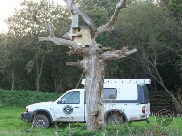 Erecting A Barn Owl Treebox 17