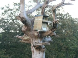 Erecting A Barn Owl Treebox 18