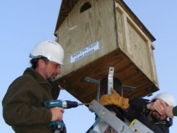 Erecting A Polebox By Hand 12