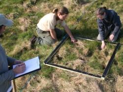 Field Vole Holes Hole Survey Quadrat