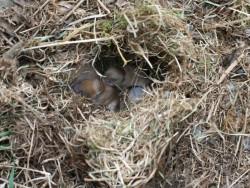 Field Vole Nest LLP