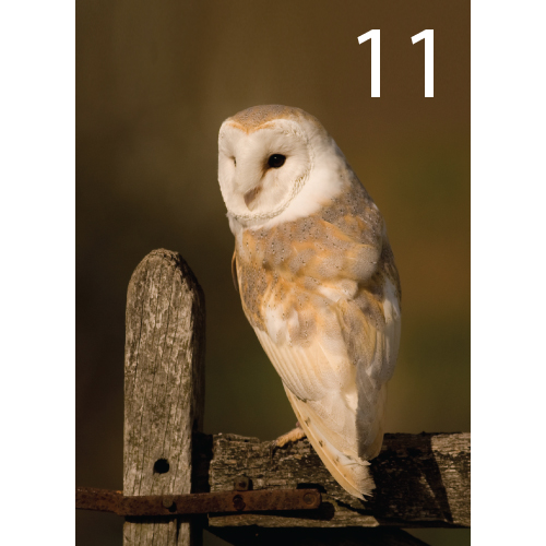 Barn Owl Greeting Cards 8 Designs A6 Size