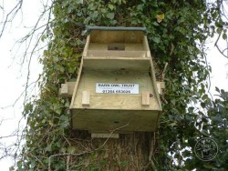 Good Barn Owl Nestbox Design 13