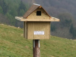 Good Barn Owl Nestbox Design
