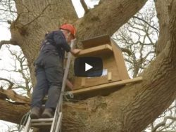How To Erect Tree Box Video