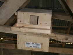 Indoor Barn Owl Nestbox Erection 02