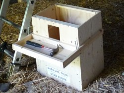 Indoor Barn Owl Nestbox Erection 03