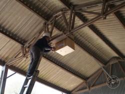 Indoor Barn Owl Nestbox Erection 08