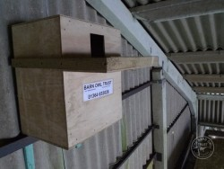 Indoor Barn Owl Nestbox Erection 10