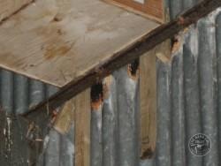 Indoor Barn Owl Nestbox Erection 13