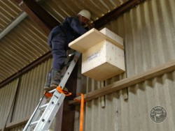 Indoor Barn Owl Nestbox Erection