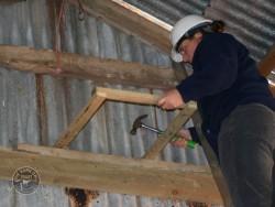 Indoor Barn Owl Nestbox Erection 19