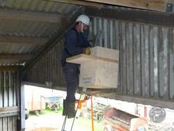 Indoor Barn Owl Nestbox Erection 21