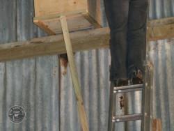 Indoor Barn Owl Nestbox Erection 23