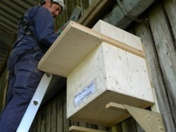 Indoor Barn Owl Nestbox Erection 26