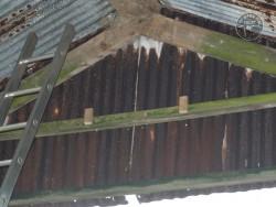 Indoor Barn Owl Nestbox Erection 29