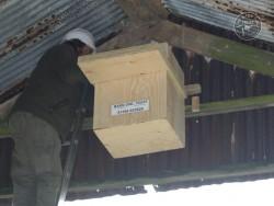 Indoor Barn Owl Nestbox Erection 30