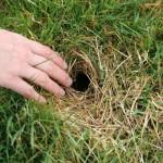 LLP Vole Hole [David Ramsden] 230308 (A)
