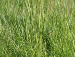 BOT LLP Wildflowers Grasses 02
