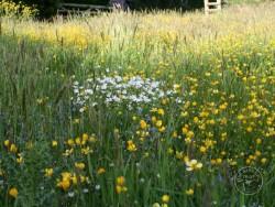 BOT LLP Wildflowers Grasses 09