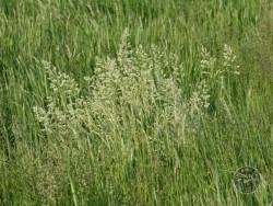 BOT LLP Wildflowers Grasses 10